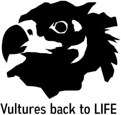 Vultures back to lfie